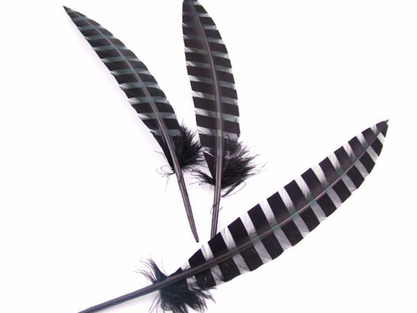 turkey feather with stripes