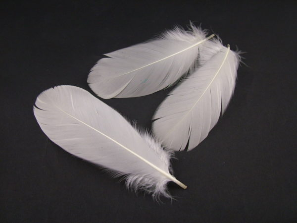 Goose Nagoire Feathers
