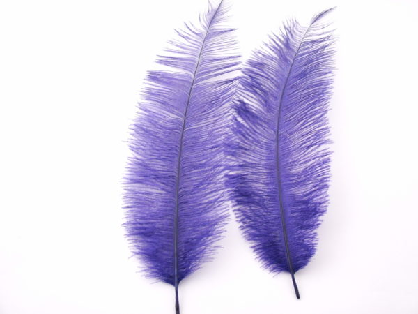 Ostrich Chick Feather