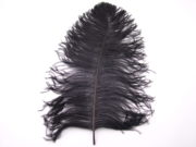 Ostrich Prime Wing Feather