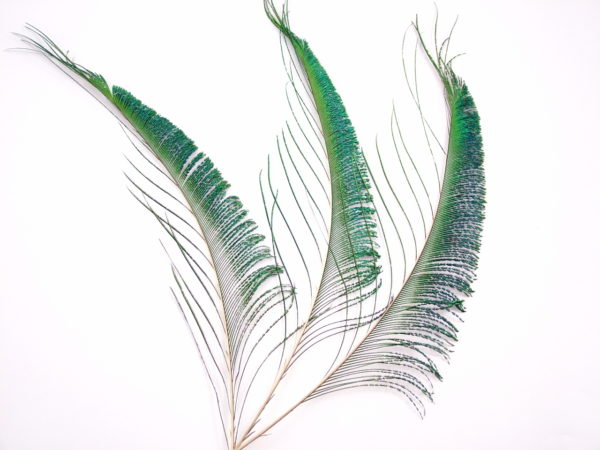 Peacock Sword Feather