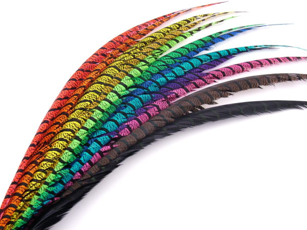 Lady Amherst Pheasant Centre Tail Feather Dyed